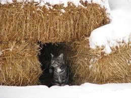 paja y gatos2